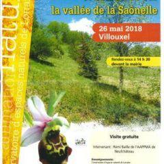 découverte des orchidées de la pelouse calcaire de Villouxel